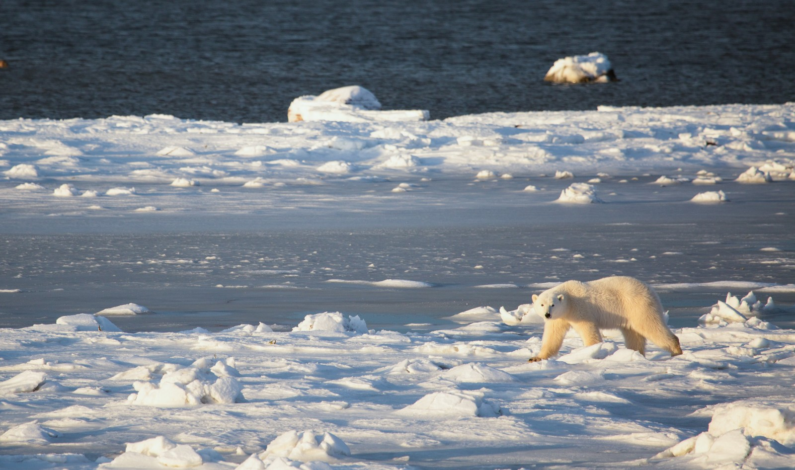 Guest blog with Loweprofessional Kt Miller: Patience, Safety & Polar Bear Photography