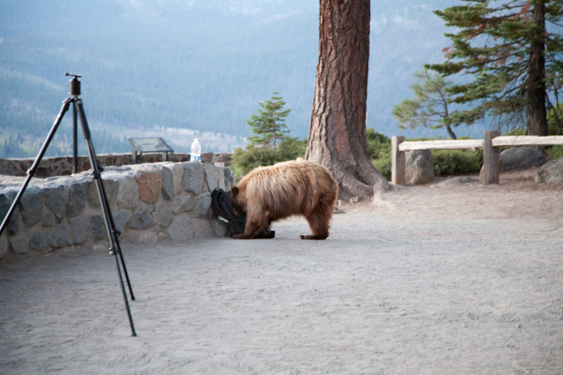 Lowepro and the Bear