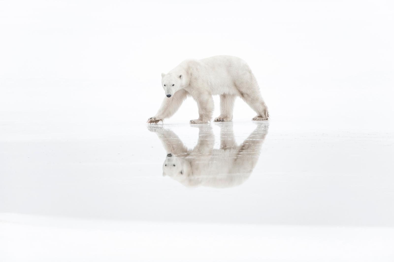 Arctique By Photographer Vincent Munier The Lowepro Blog