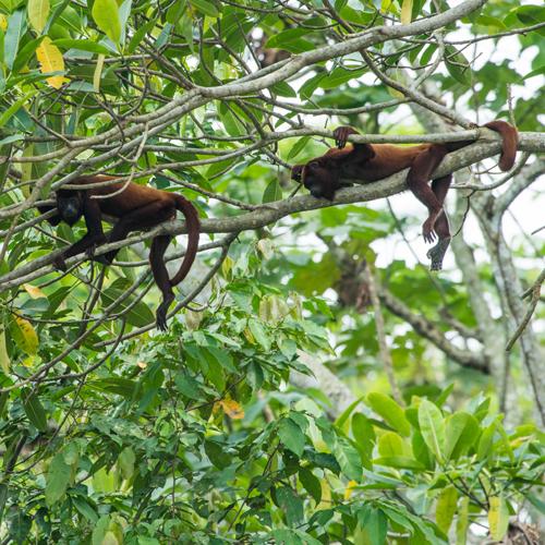 Danny Schmidt: Documenting the Monkeys of Columbia