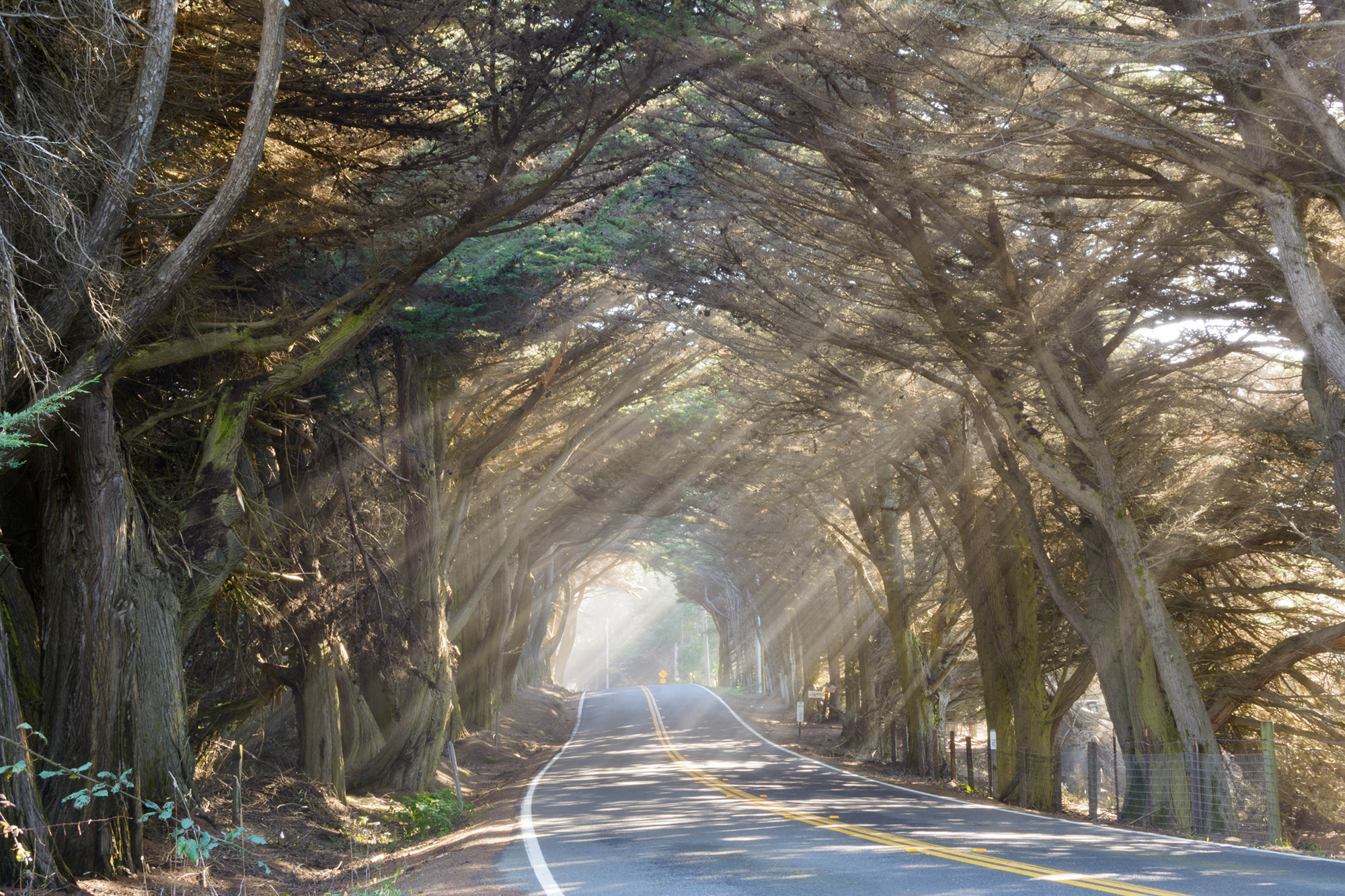 Fort Bragg Tree Tunnel Light