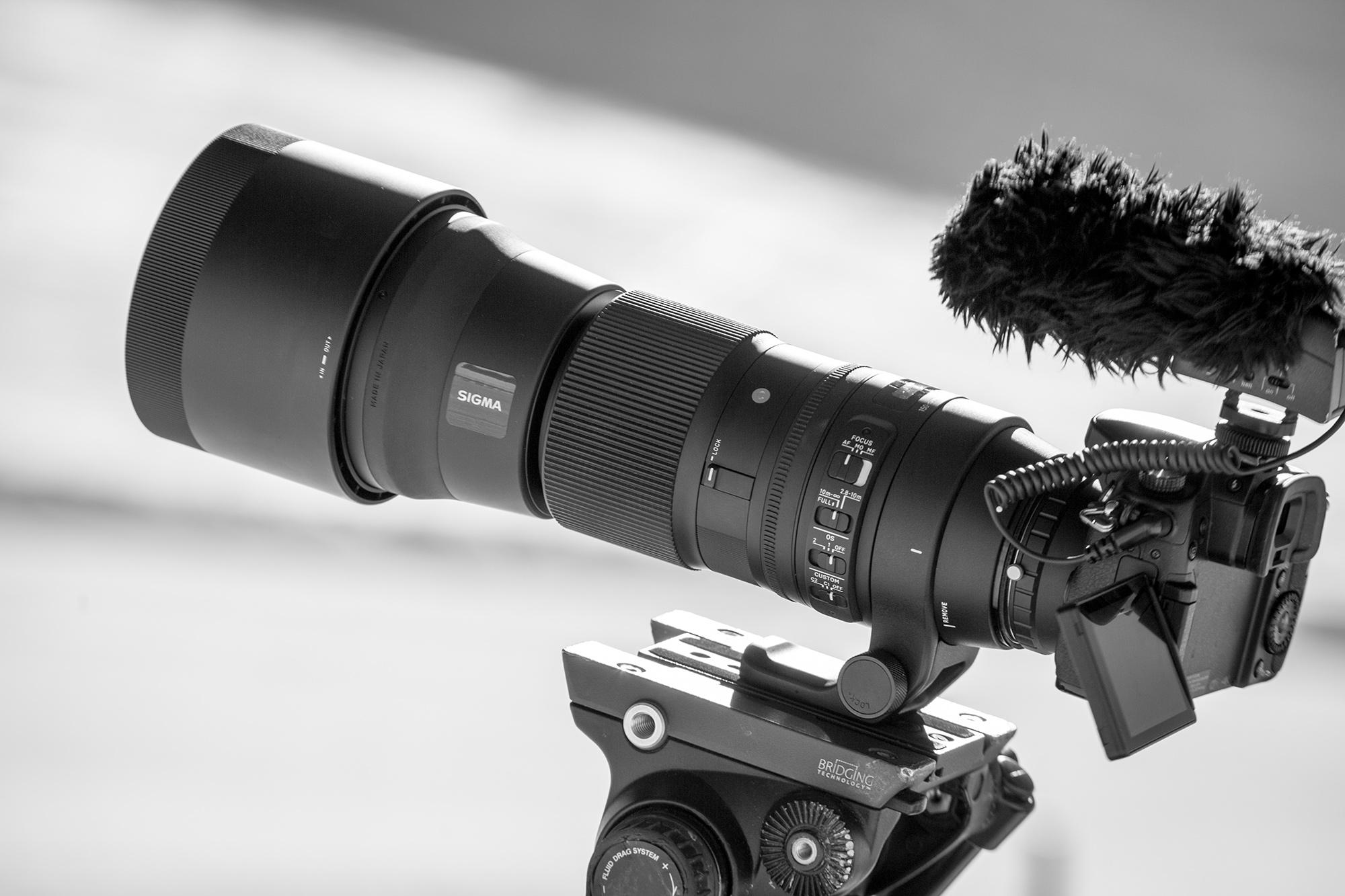 Sigma new long lens on a Panasonic-GH4